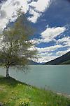 Tree, sky and lake. Lake Resia, Italian/ Austrian border.