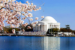 Cherry Blossom Festival at The Jefferson Memorial at The Tidal Basin, Washington DC. Photo by John Drew c/o www.professionalimage.com
