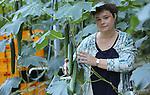 Foto: VidiPhoto<br /> <br /> SEVENUM - Portret van Carla Houben van komkommerteler Augouria BV in Sevenum.
