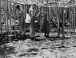 U.S. Marines on patrol at an undisclosed South Pacific location..S. Marines hang their machine gun belts to dry on Guadalcanal.