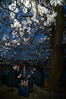 Cherry blossom viewing, Ueno Park, Tokyo, Japan, March 26, 2013.