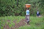 A woman carries water home in Dundube Kadambo, in northern Malawi.