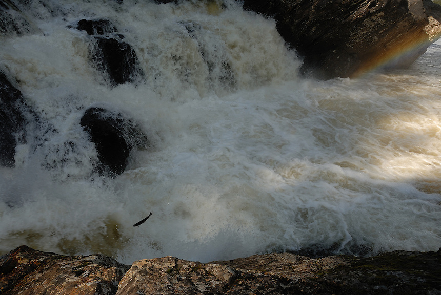 Waterfall in Gaula,Norway,where the salmon jumps to get further up in the river