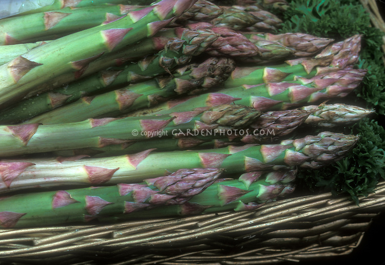 Vegetable asparagus variety Franklin picked and in basket showing closeup of spears
