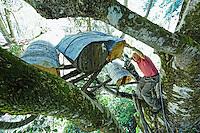Camlihemsin: Mustafa Memoglu in the branches of a beech tree inspects his trunk hives called Kara kovan. The particularity of the honey produced in these hives is that the bees build themselves the wax combs without any intervention by humans. It follows that the shape of these natural combs, built from the top down, is irregular, triangular or rounded. As to the quantity of honey, that is due to the multitude of native mountain plants (around 350 types) from which the bees draw the nectar at between 1500 and 3000 metres altitude.///Camlihemsin: Mustafa Memoglu, inspecte dans les branches d'un hêtre ses ruches troncs nommée Kara kovan. La particularité du miel produit par ces ruches est que ce sont les abeilles, qui fabriquent elles-mêmes les rayons de cire, sans aucune intervention humaine. Il s'ensuit que la forme de ces rayons naturels, construits de haut en bas, est irrégulière, triangulaire ou arrondie. Quant à la qualité du miel, elle est due à la multitude de plantes de montagne endémiques (autour de 350 sortes) butinées par des abeilles, entre 1500 et 3000 mètres d'altitude.