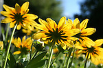 Behind the yellow daisies