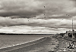 """Reminiscent of Alfred Hitchcock's """"The Birds"""", seagulls fly circular patterns along the shore of Bush Point, in Whidbey Island, Washington State."""