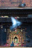 Temple and Pigeon Bhaktapur Temples and Palace, Nepal,
