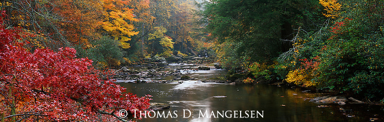 A stream flows through the fall color in Great Smoky Mountains National Park, Tennessee.