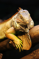 Animals - Reptiles and amphibians
