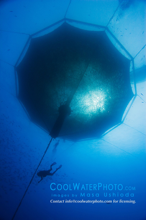 scuba diving worker and 3,000-cubic-meter submersible fish pen installed in open ocean just off Kona Coast to raise Kona Kampachi, Hawaiian yellowtail, aka almaco jack or kahala, Seriola rivoliana, Kona Blue Water Farms, Kailua Kona, Big Island, Hawaii, USA, Pacific Ocean