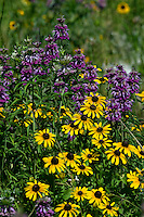 Horsemint and Rudbeckia Flowers