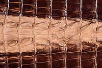 Treated Crocodile Skin, leather from Australia