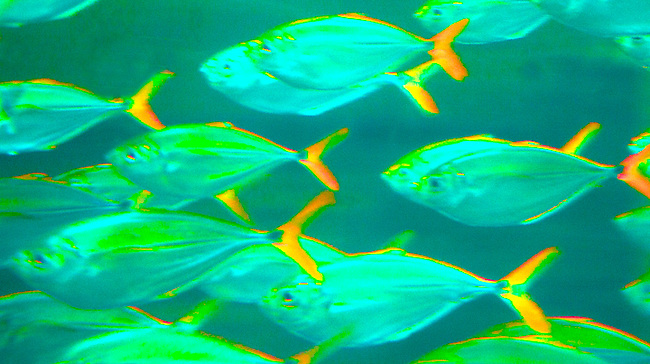 If andy warhol were a fish stillness in motion photography for South carolina freshwater fish