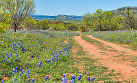 This years crop of bluebonnets is nothing like we have seen in the past but it was still a pretty image with the old dirt road and wildflowers along the way and the hill country in the background.  It is also good to see the mesquite trees that litter the roadside in this image to get the feel of the back coutry in Texas.