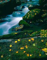 Aspen Leaves & Falls, Manti-La Sal National Forest, Utah    La Sal Mountains