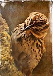 Portrait of a Bird - Photograph by Alan Mahood.