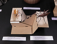Cicada Nymph, opus 588, and Aedes aegypti, opus 619 origami designed and folded by Robert Lang, California, USA