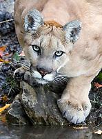 North America Nature & Wildlife