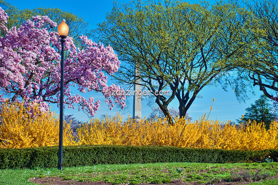 George Mason Memorial, Cherry Blossom trees,  District of Columbia, Washington D.C.