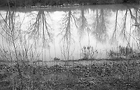 trees on a winter day reflected in a pond in Seattle, Washington