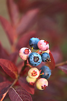 &quot;Synchronous Seasons&quot;<br />