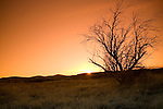 Washington, Eastern, A lone tree is silhouetted by the setting sun in the arid region of South Eastern Washington. CF
