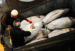 Frozen tuna is loaded into a container at Misaki Port fish market, west of Tokyo, Japan on Tuesday March 17 2009.