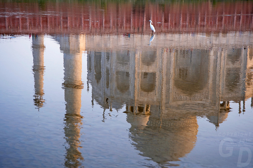 The Taj Mahal view from the back with the river and reflections and Bird an Egret
