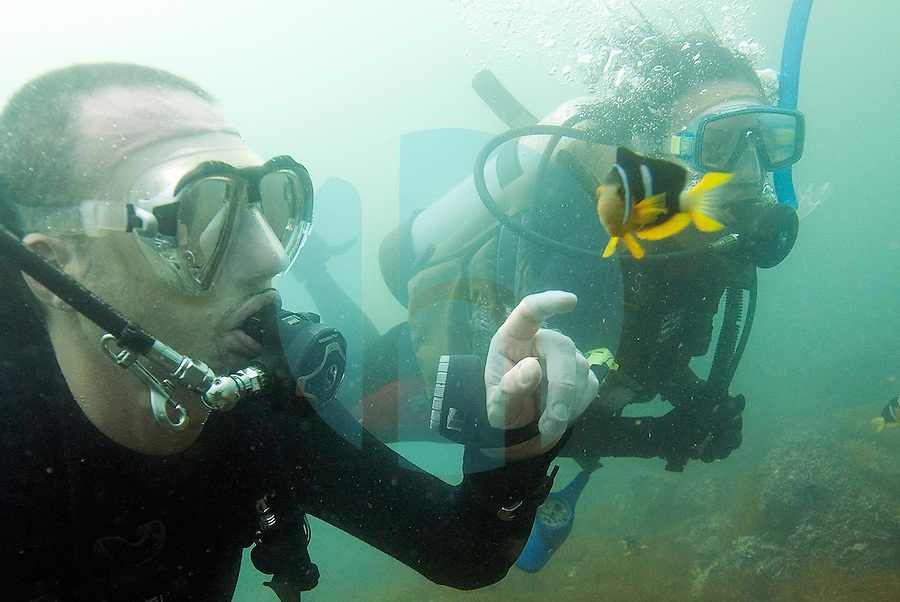 """20080720_HONG KONG_ A pair of divers play with an anemonefish, while diving the """"Trio Islands"""" in Hong Kong's Sai Kung District.  The divers are part of a British Sub Aqua Club or BSAC dive expidition.  Photographer: Daniel J. Groshong/Tayo Photo Group"""