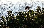 Bird in Bush 2, Crystal cove, CA.