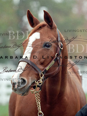 Capades, by Overskate, won the G1 Selima, the Canterbury Oaks (G3), Nijana (G3), Athenia (G3), Broad Brush, Mount Vernon, New York H. (G2) and Matchmaker Stakes (G2).  She earned over a million dollars.  At Keeneland in November 1998