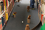 Andy Spriggs putts a golf ball past stuffed owls during the Alden Open, a Dad's Weekend Mini-Golf event in Alden Library, on Saturday, November 7, 2015. Photo by Kaitlin Owens