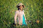 Sim Saroum walks through a rice field in the Cambodian village of Talom.