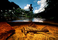 """""""Smokin Hassar"""" underwater with Amerindian John anthony fishing in his dugout canoe in top of frame.  They call the Loricariid catfish Smoking Hassar because it breathes in and out when you pull it out of the water and the locals put cigarettes in its lips and it blows smoke."""