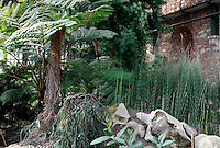 Plant History Glasshouse (formerly Australian Glasshouse), 1830s, Rohault de Fleury, Jardin des Plantes, Museum National d'Histoire Naturelle, Paris, France. Low angle view of cyatheales with Equisetum myriochaetum plants on the right of the picture.