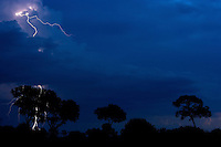 Lightning brightens the night sky over silhouetted trees in Botswana.