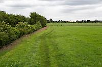 Hadrian's Wall Footpath often follows the edge of farmers' fields.  Cumbria, England, UK.