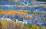 An autumn snowfall dusts the aspens and pines near Dunkley Pass on the Flat Tops Trail, White River National Forest, Colorado.