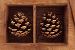 Close up from above of two pine cones of Scots pine or Pinus sylvestris tree each lying in compartment of wooden box