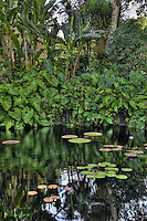 Fairchild Tropical Botanic Gardens, HDR, Miami, Coral Gables, Lily Pads, Palm Trees, Pond, Foliage<br />