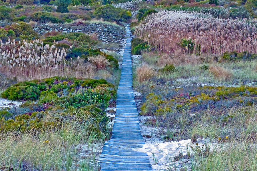 Boardwalk through dunes, Amagansett, The Atlantic Double Dunes Preserve-The Nature Conservancy, Atlantic Ocean, Long  Island, New York