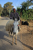 A farmer in Sakkara, ourside Cairo.
