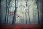 Peaceful foggy forest scenery in late autumn.<br />
