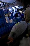 Tuna on a handcart being pulled through Tokyo Tsukiji Fish Market..Tokyo Metropolitan Central Wholesale Market or Tsukiji Fish Market is the largest fish market in the world.