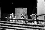 PUPPY FARMING WALES 1980S