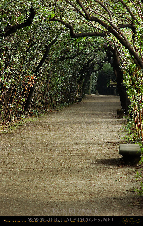 Boboli Gardens Viottolone Oak Arbor