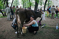 Moscow, Russia, 12/05/2012..A woman milks a cow in Chistiye Prudy, or Clean Ponds, a park in central Moscow were some 200 opposition activists have set up camp..The cow was brought by a group of farmers protesting against Russia's plans to join the World Trade Organisation.