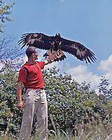 Ron Austing in his youth, holding a Golden Eagle