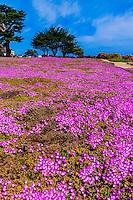 California-Monterey County-Misc.